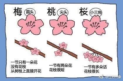 花的区别.webp.jpg