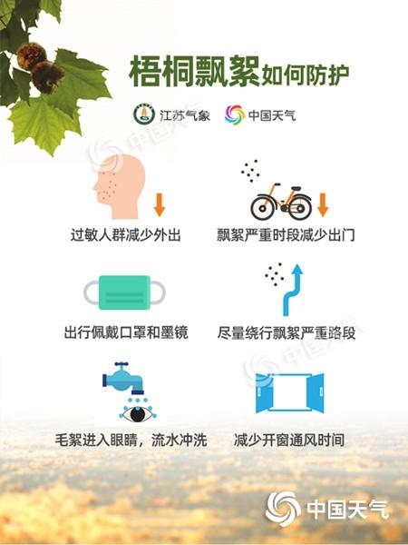 """飘絮预报出炉!未来三天南京主城区梧桐""""毛毛雨""""雨量中等"""