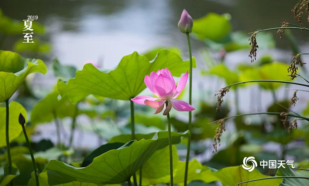 北京植物园近观夏花之美