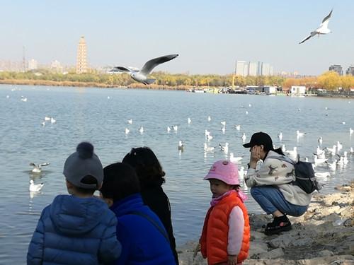 天暖 湖蓝 人鸟合谐   好天气滞
