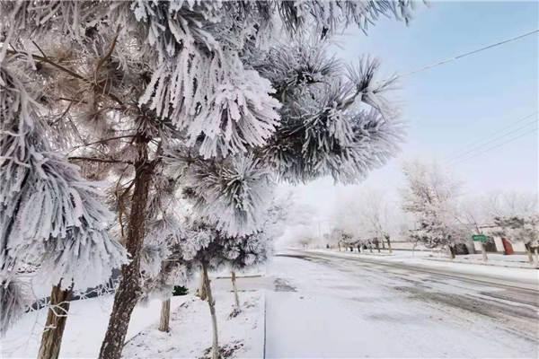 新疆哈密市伊州区出现雾凇美景