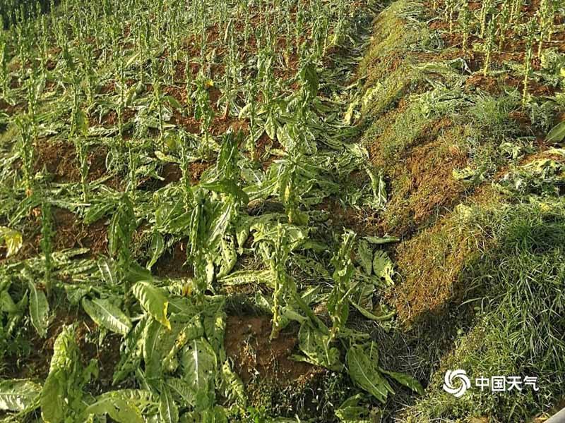 http://www.23427.site/kunmingxinwen/17918.html