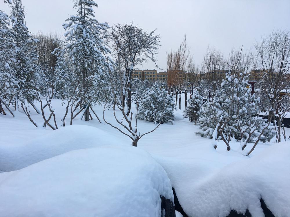 香格里拉城区雪景3.jpg
