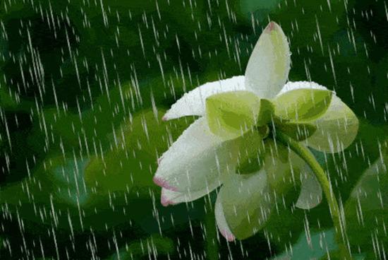 雨一直下!强降水怒刷存在感 今明两天云南局地仍有暴雨~