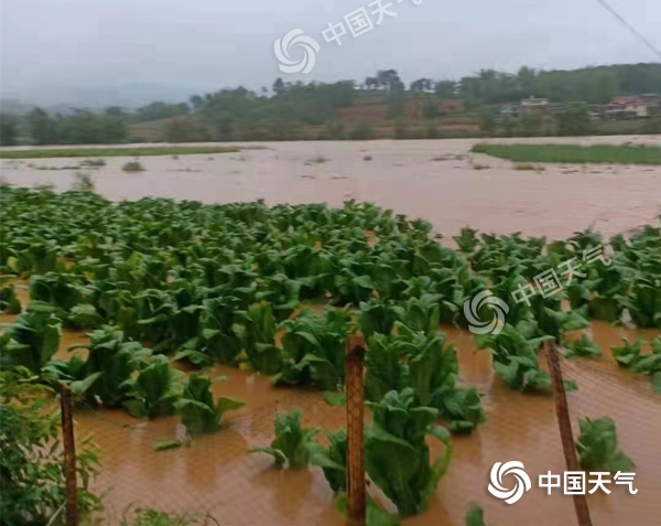 http://i.weather.com.cn/images/yunnan/tqyw/2021/06/09/1623208678068099184.jpg