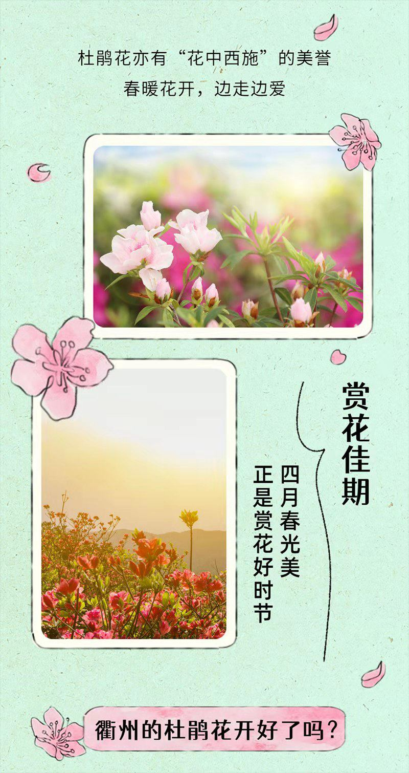 衢州杜鹃花最佳观赏期预报