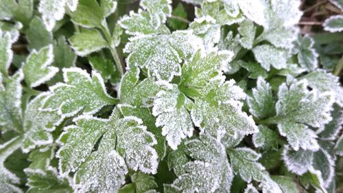 杭州市植物初霜美景