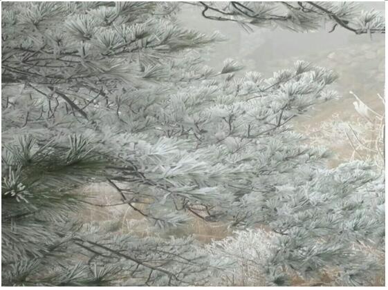 永嘉县岩头镇大坵田村出现冰冻和雾凇奇观