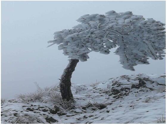 """冬季最美不过冰雪""""白"""""""