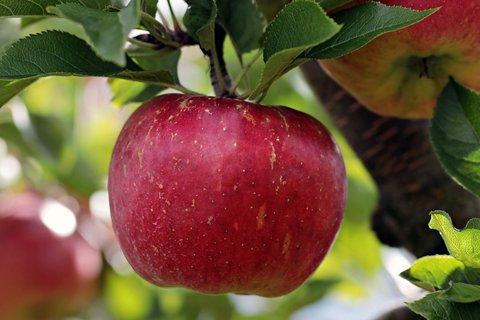 立冬后吃什么水果?这5种水果维生素都补全了