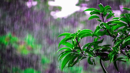 谷雨节气到  民间习俗了解一下?
