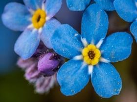 涕泪横流未必是感冒 立秋后易花粉过敏