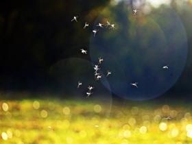 喝了白露水 蚊子闭了嘴?秋天的蚊子更要小心