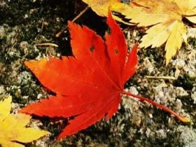 秋季皮肤干燥缺水 如何做好保湿?