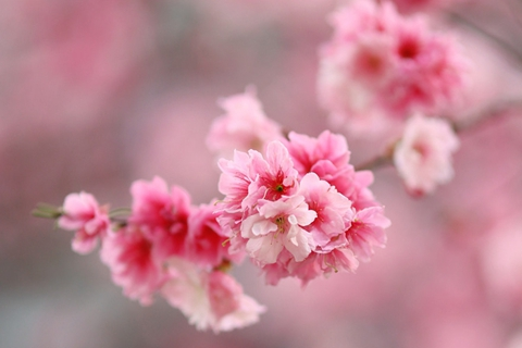 春季天气转暖万物复苏 请收下这些养生小贴士