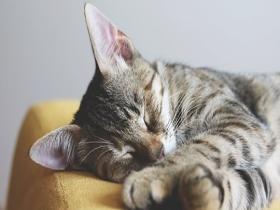 夏秋交替 每天多睡1小时利养生