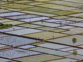 芒种忙着种 河北隆化天晴水稻插秧忙