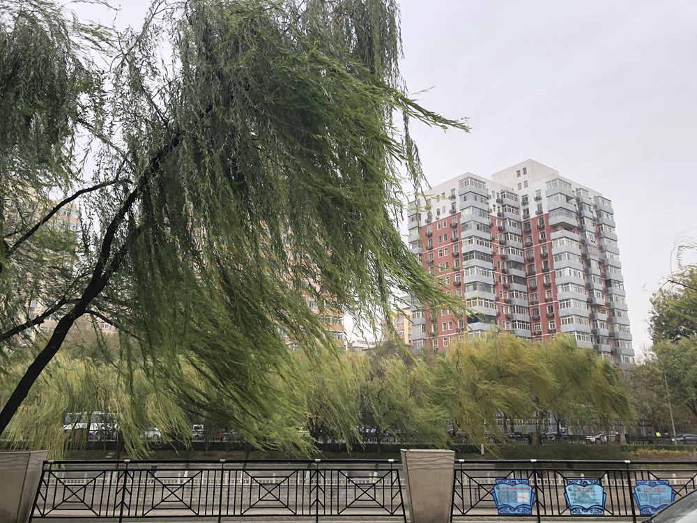 秋风扫落叶 北京今日午后现8级大风