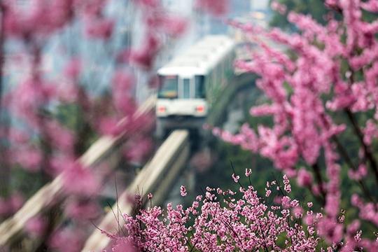 """春回大地 快来一起""""云赏花""""!"""