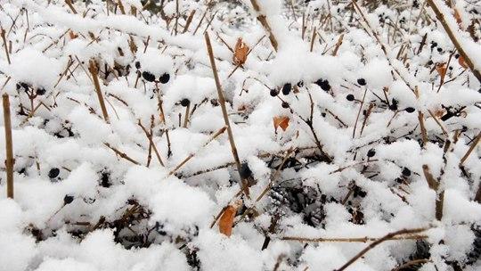 寒潮影响下的北方:雨雪纷飞