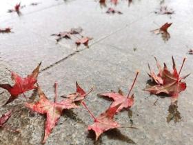 甘肃静宁雨打红叶落 秋韵更浓