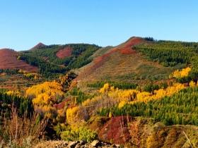 河北崇礼层林尽染红叶烂漫 美如油画