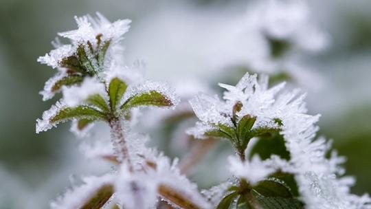 贵州玉屏绿植穿戴霜花 呈现朦胧美