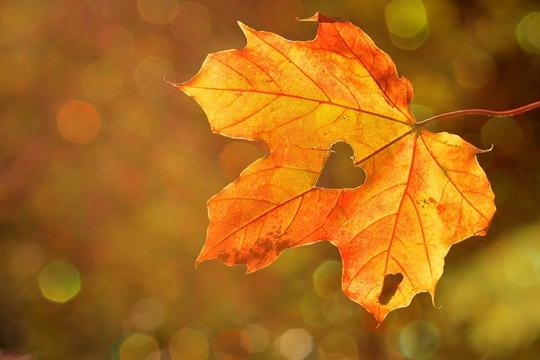 秋分:秋风萧瑟天气凉 草木摇落露为霜