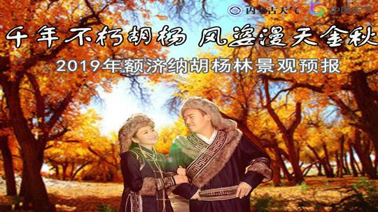 2019额济纳胡杨林观赏预报出炉 感受千年不朽胡杨的魅力