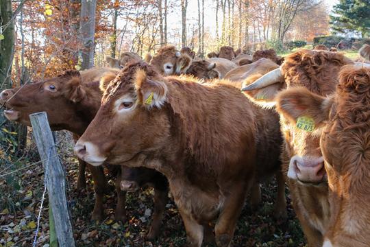 大寒期间农事安排小提示