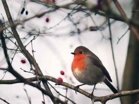 #节气365#之大雪:寒号鸟是鸟吗?
