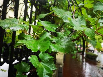 今日雨渐止   周五再迎降水